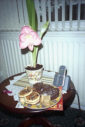 Art and Documentary Photography - Loading edies plant.jpg
