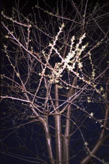 Art and Documentary Photography - Loading nickys tree.jpg