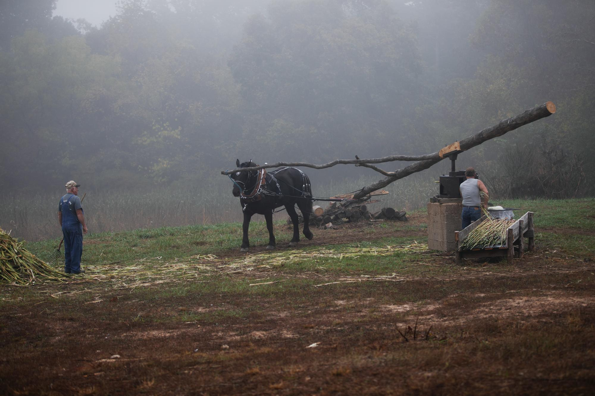 The early morning fog still blankets the hills and hollers of Texas County as Larry Hayes and Carl Shelton begin work on grinding sorghum molasses. The Kirkwoods, Sheltons and Hayes families still make molasses the old-fashioned way — using a horse powered mill.