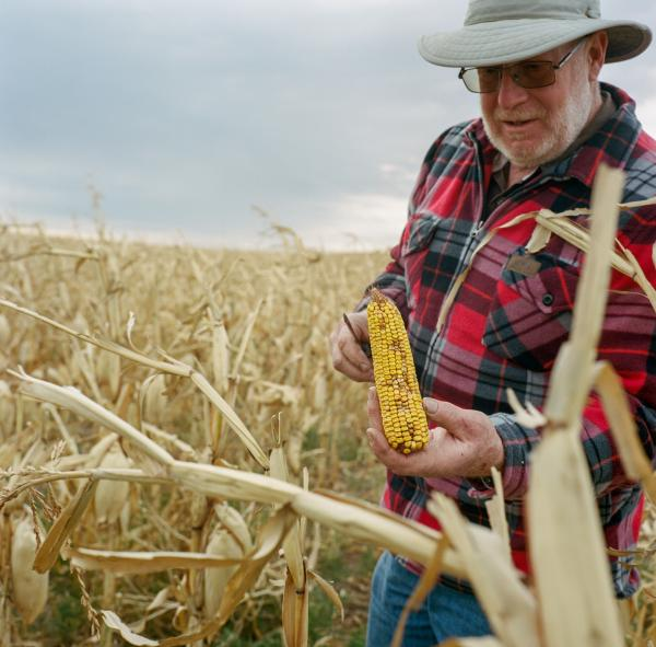 "Wade Sikorski, 64, displays corn from his crop that was destroyed by a hail storm. ""It was the worst hail storm of my life"" he said. Extreme weather events have become more common in the region, according to Mr. Sikorski. He is active in opposing the Keystone XL pipeline ""the thing that I worry about most is the impact it will have on global warming and how it will affect extreme weather events...what I'm seeing now is that extreme weather events could put us out of business in just a few decades...basically it comes down to food or oil."""
