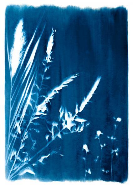 Cyanotypes of Natives