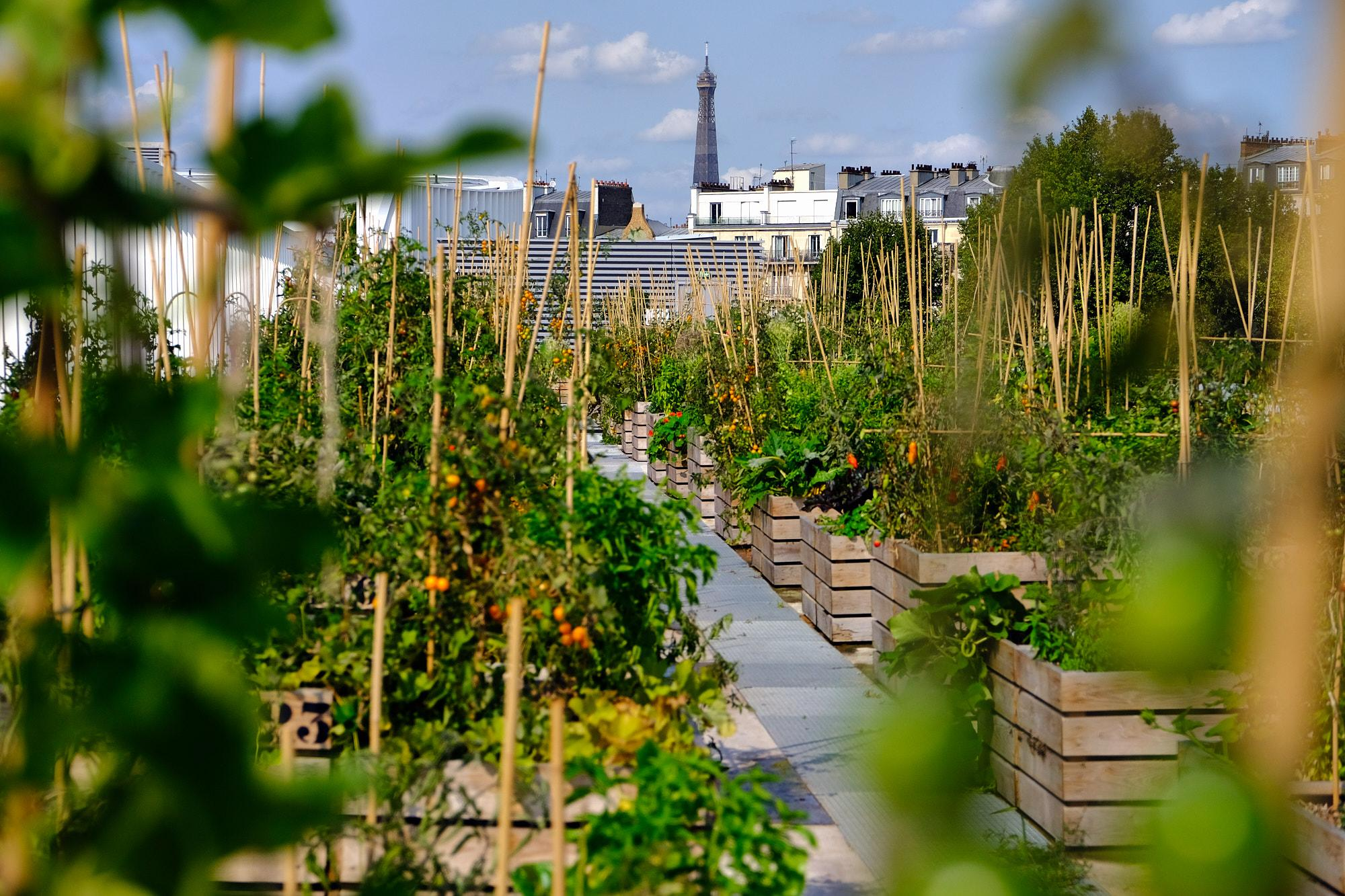 Individual plots are available for people who want to grow their own vegetables and fruits. Here plots are shown with a view of the Eiffel tower in the background,