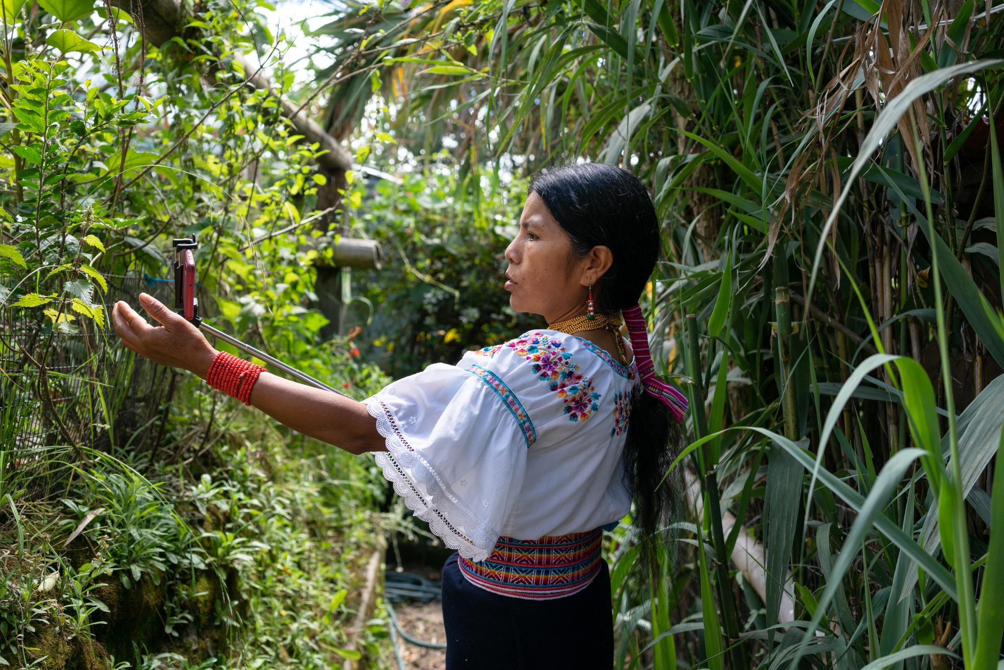Laura Santillan makes videos to share with her students via WhatsApp. She teaches in Kichwa language about the parts of the body and the variety of plants in the school garden. Yachay Wasi, Bilingual Intercultural Community Education Center, is an institution that works with contributions from the Government and, above all, with donations and small monthly financial contributions from some families of the students. The school has 70 students between 5 and 13 years old. The monthly value per child is $ 35 and for many families it is priceless. They propose a community education, based on the values ​​and wisdom of indigenous, respect of mother earth, combining with contemporary knowledge. Most of its students are migrant farmers from other regions of the country, so learning from the school's biodiverse crops is a requirement. The school started illegally after the indigenous uprising in the 90s, its principals are indigenous. In 2001 they legalized the school. Due to the Pandemic-Covid19 the teachers prepare their classes and share them with the children through WhatsApp and Zoom. Most students have Internet access at home or on their cell phones. Most families have a single digital device. Teachers print assignments weekly for families who do not have internet acces. The teachers' challenge is to generate educational material and that the students do not stop studying. Photographer: Ana María Buitron. Quito, Ecuador. Laura Santillan hace videos para compartirlos con sus estudiantes vía Whatsapp. Enseña en lengua Kichwa sobre las partes del cuerpo y sobre las plantas del huerto de la escuela. Yachay Wasi, Centro Educativo Comunitario Intercultural Bilingüe. Es una institución que funciona con aportes del Estado y se sostiene sobre todo con donaciones y pequeños aportes económicos mensuales de algunas familias de los estudiantes. La escuela tiene 70 estudiantes entre 5 y 13 años. El valor mensual por niño es $35 y para muchas familias resulta