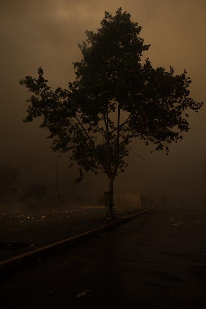 a tree under the smoke and fire of the barricades