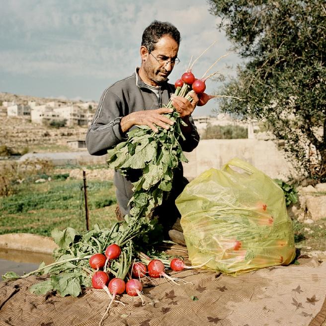 Art and Documentary Photography - Loading Kaufman_Leeor_sabras for visura (2 of 21).jpg