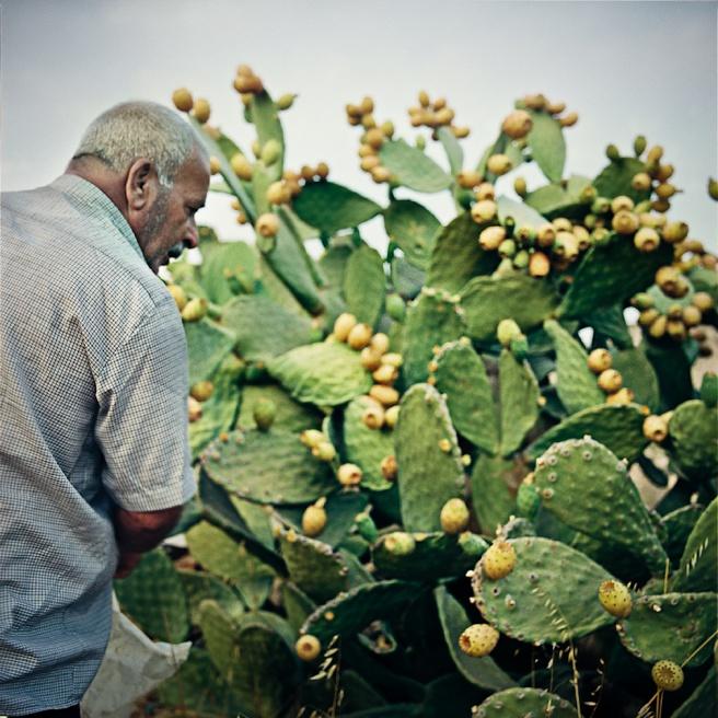Art and Documentary Photography - Loading Kaufman_Leeor_sabras for visura (3 of 21).jpg