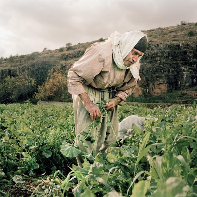 Art and Documentary Photography - Loading Kaufman_Leeor_sabras for visura (5 of 21).jpg