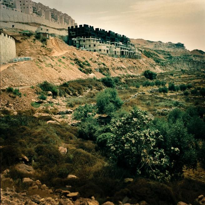 Art and Documentary Photography - Loading Kaufman_Leeor_sabras for visura (8 of 21).jpg