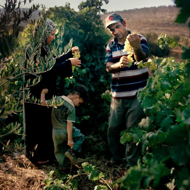 Art and Documentary Photography - Loading Kaufman_Leeor_sabras for visura (20 of 21).jpg