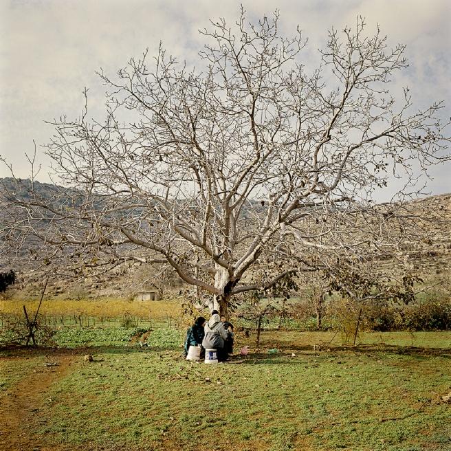 Art and Documentary Photography - Loading Kaufman_Leeor_sabras for visura (21 of 21).jpg