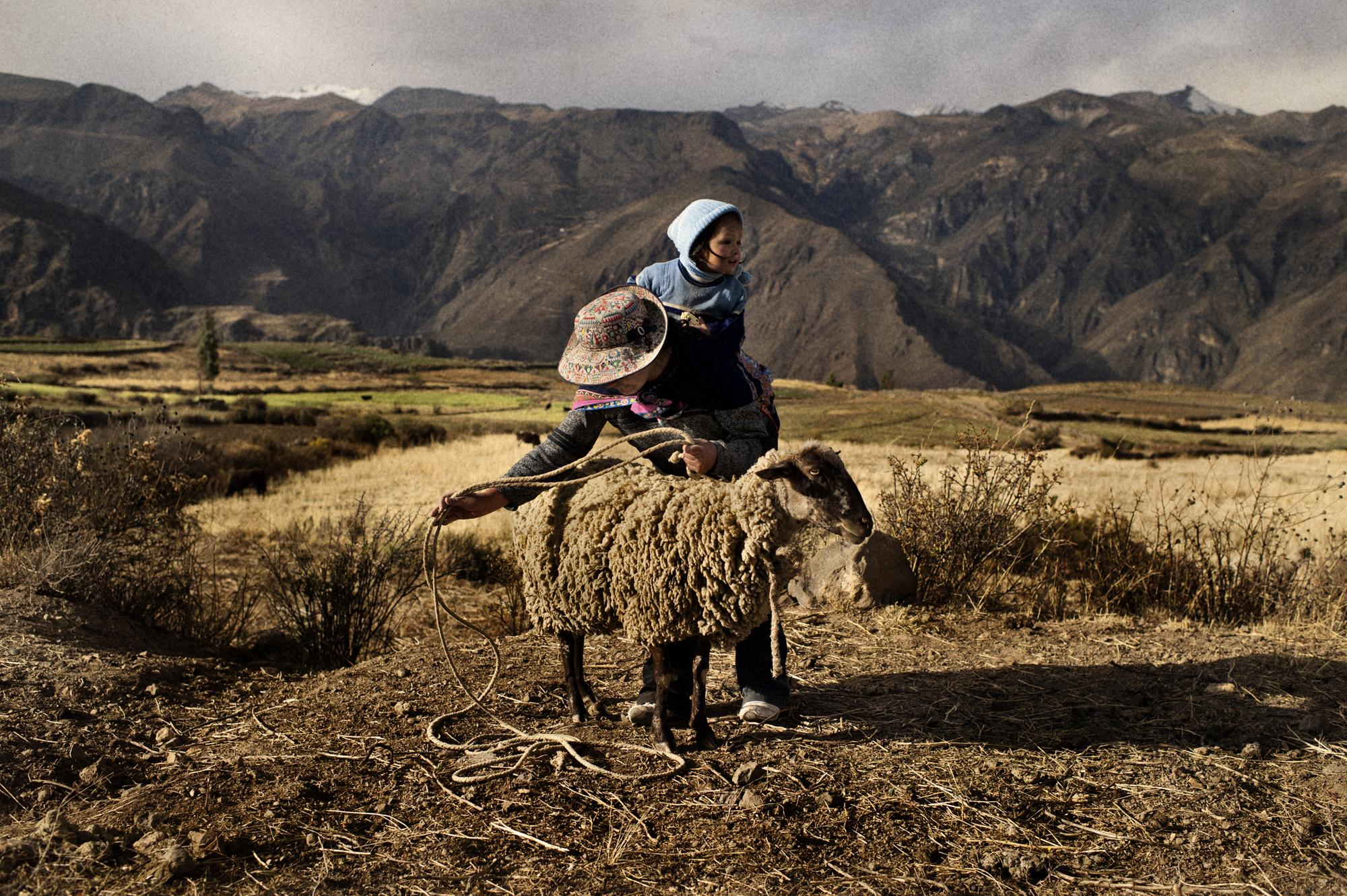 "Peru, Pinchollo, Distrito Cabanaconde, Chibai. September 2011 Betty with her son Bryan moving her sheep to another place. Betty�s husband dies two years ago, he was a musician and an alcoholic. Betty has now access to microcredit and she grows corn, lima beans and has sheep. Betty also makes artisanal figures to sell to the tourists. She lives alone with her son Bryan, her dream is to own a house of her own one day. Betty works all day long because it helps her not to think about her husband, ""I don�t feel sad when Im busy"".."