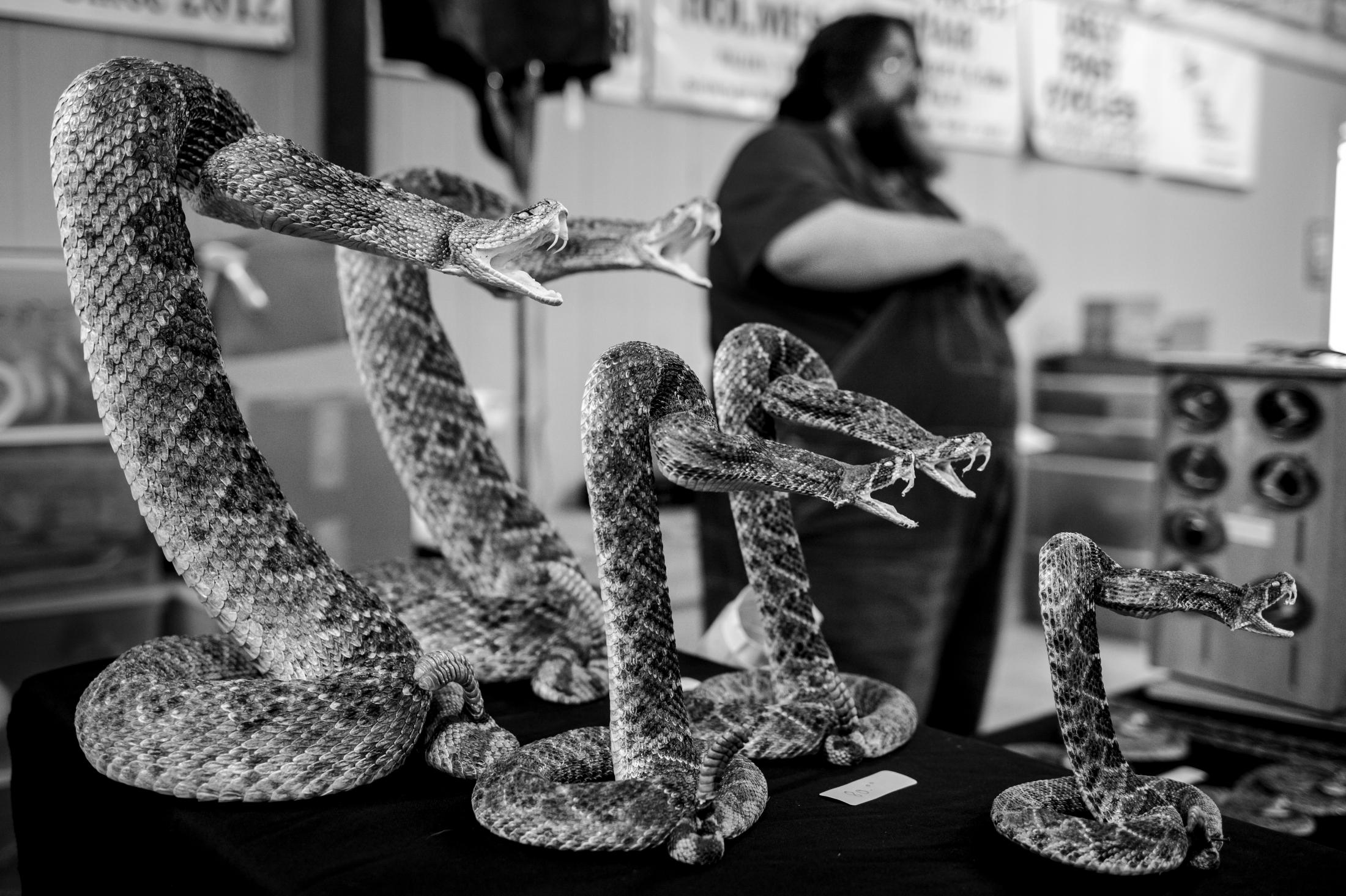 Stuffed snakes sit on a vendors table at the 2020 Rattlesnake Roundup in Sweetwater, Texas.