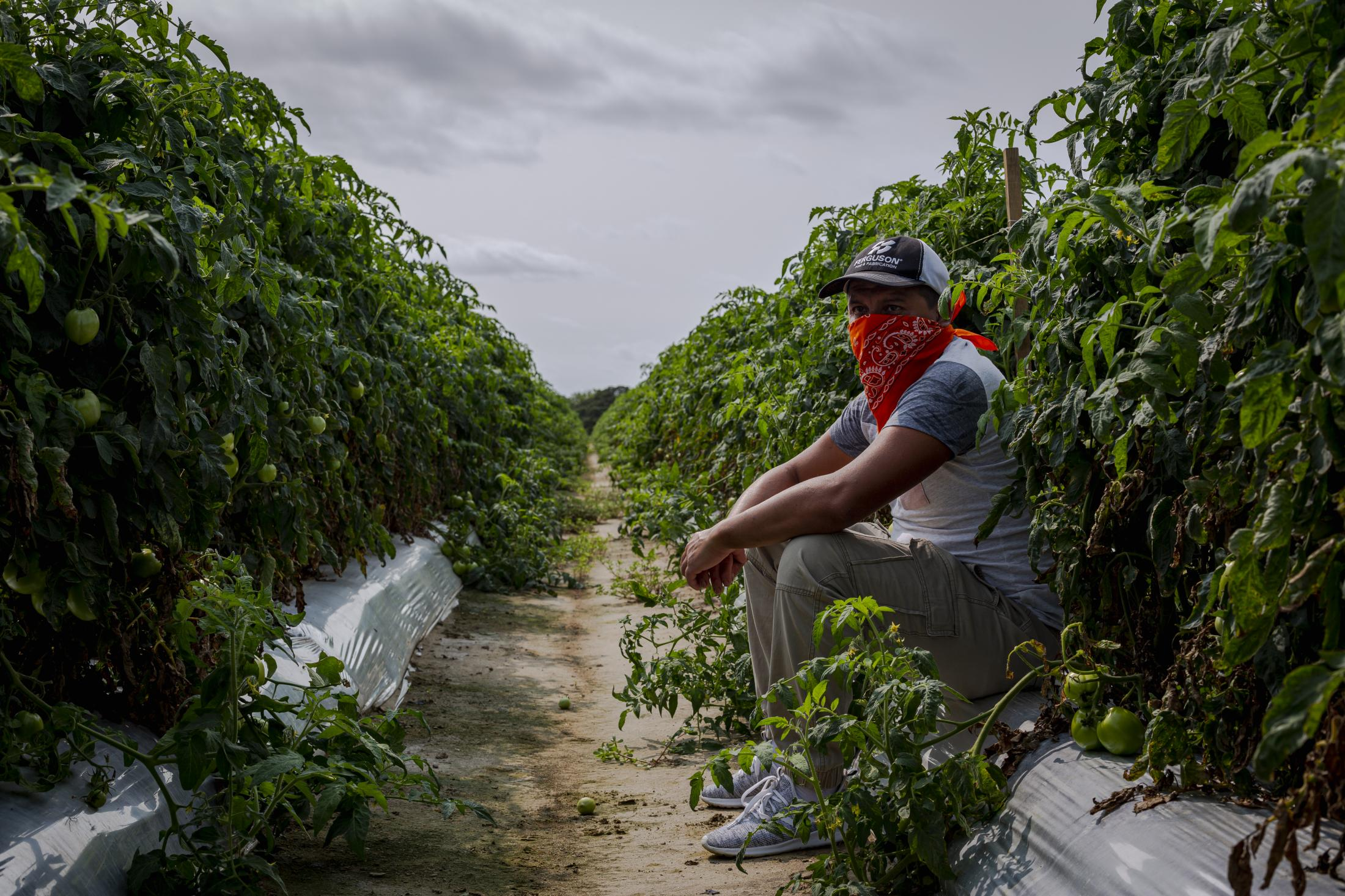 CHERITON, VA – September 9, 2020: Seasonal farmworker pose for a portrait in one of the many tomato fields in the remote Eastern Shore of Virginia. Seasonal farmworkers are brought by the thousands to toil in the tomato fields, since the start of the covid-19 pandemic, their conditions have worsened. Photo: Carlos Bernate for The New York Times