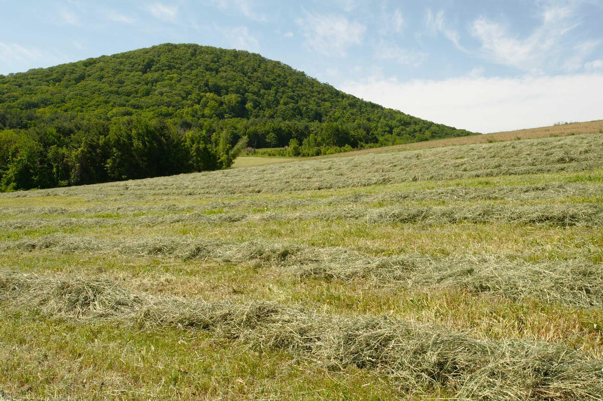 Round Mountain, Lilac Ridge Farm. Brattleboro, Vermont, USA. June 2009.
