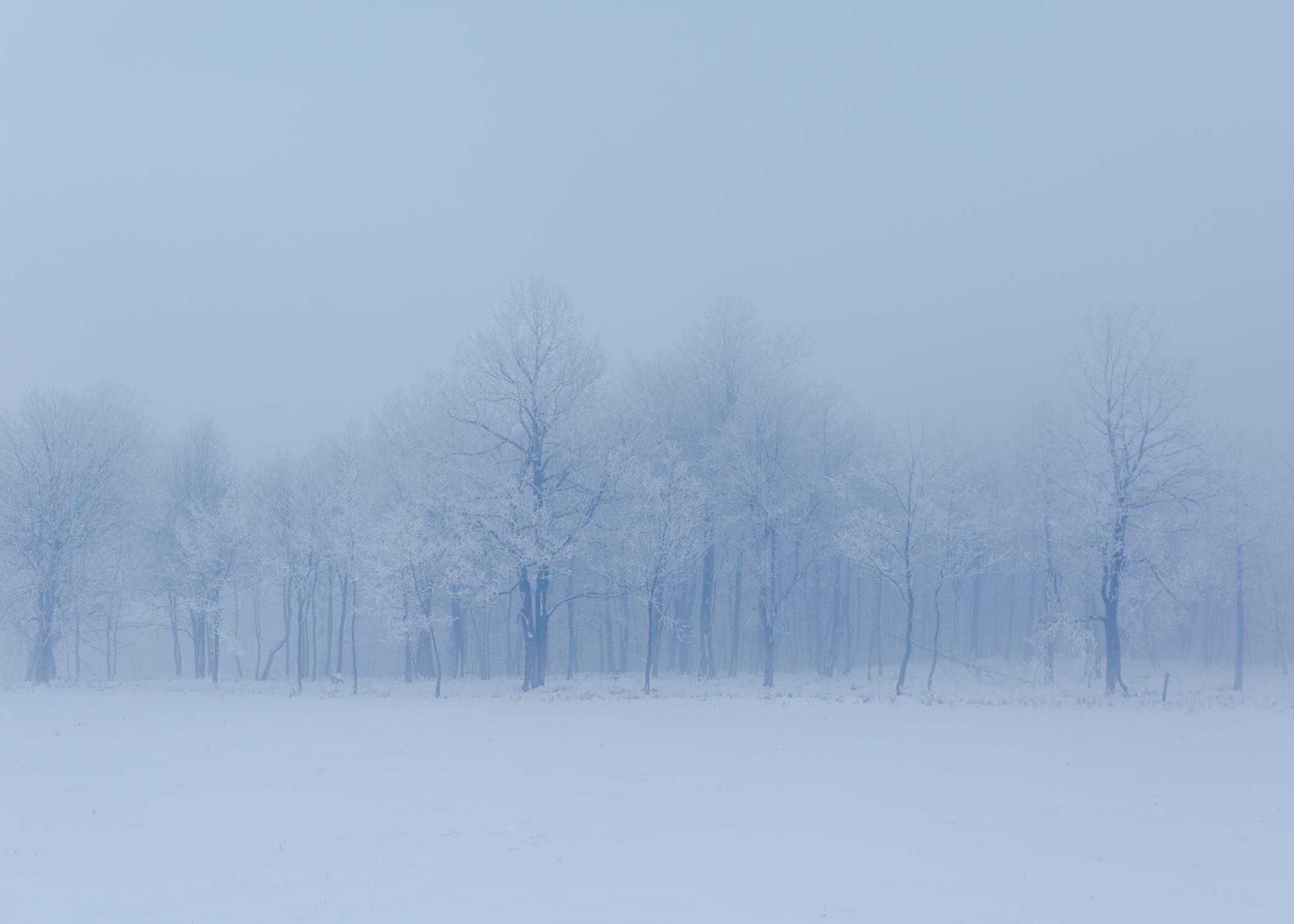 Forest trees close to Lipa camp. During the night temperatures drop to minus 10° degrees.