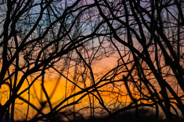Colors through bare branches