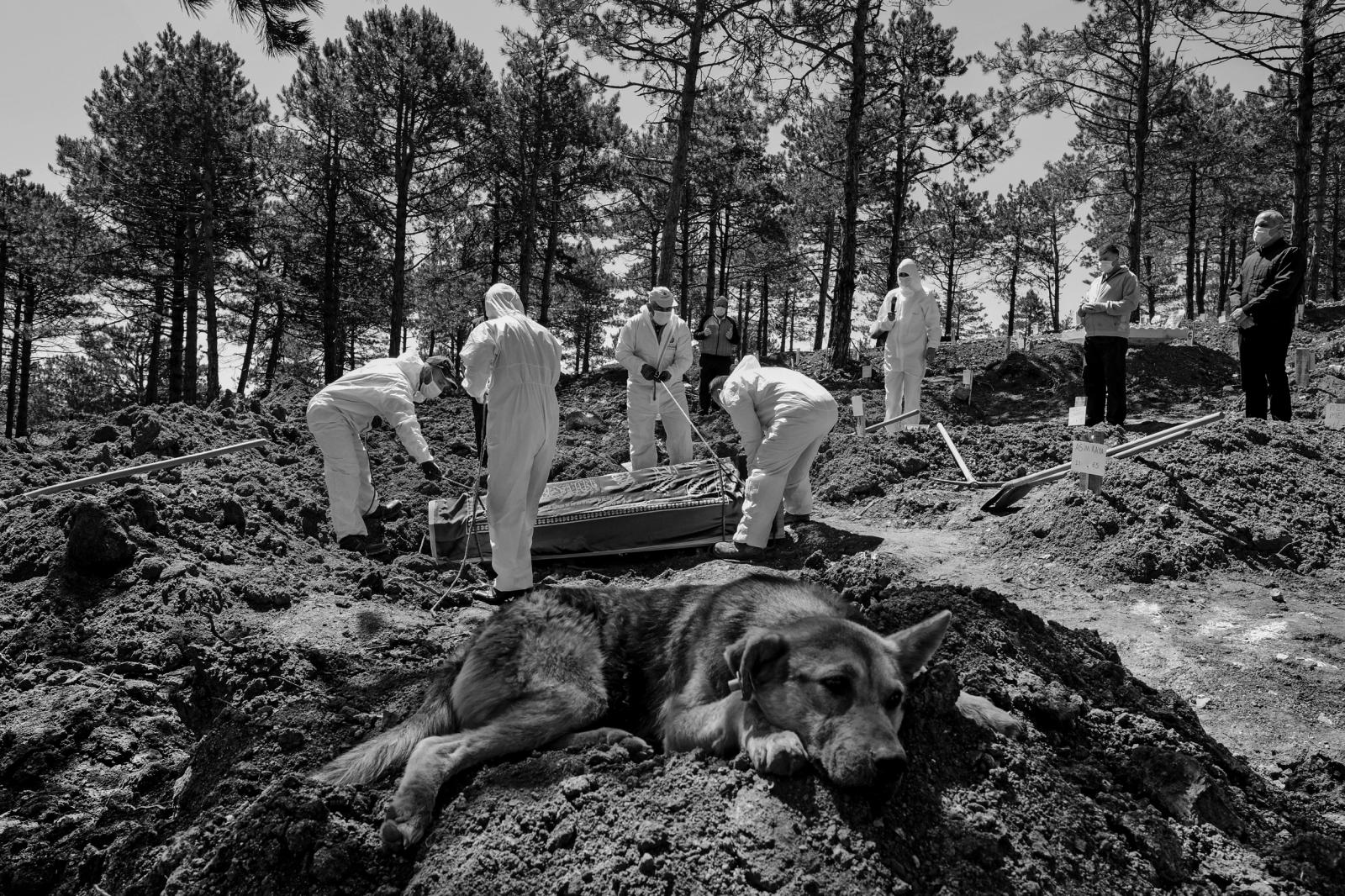 ISTANBUL, TURKEY, MAY 24-Citizens who lost their lives due to the coronavirus buried in a specified area in the Yukarā± Baklacā± Cemetery, which was prepared later on the Anatolian side of Istanbul. Because of the epidemic, no one is allowed to attend the funeral, except for first-degree relatives of the death. The cemetery officials dressed in special clothes bury the body with a coffin. Strait dogs accompany these silent funeral ceremonies.