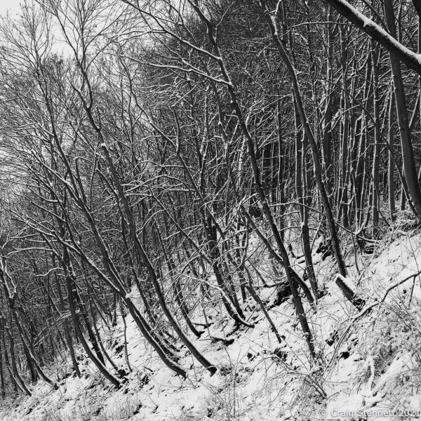 Snow trees. Salzatal, Saxony-Anhalt, Germany.