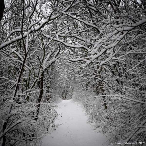 Snow wood. Salzatal, Saxony-Anhalt, Germany
