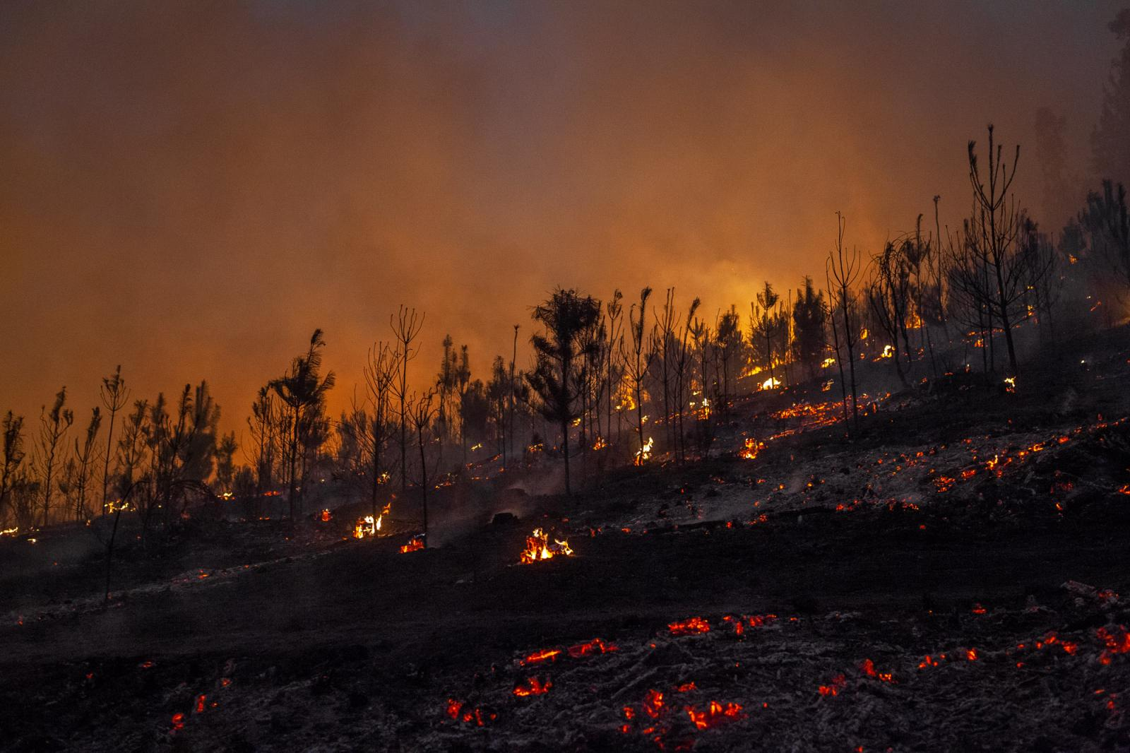 A forest fire near Bio Bio Region. Several forest company uses to burn their forest in order to renew their production, often they goes out of control causing huge impact in the environment and nearest towns, often most of them Mapuche communities. January, 2017. Between Maule and Bio-Bio regions. South of Chile.
