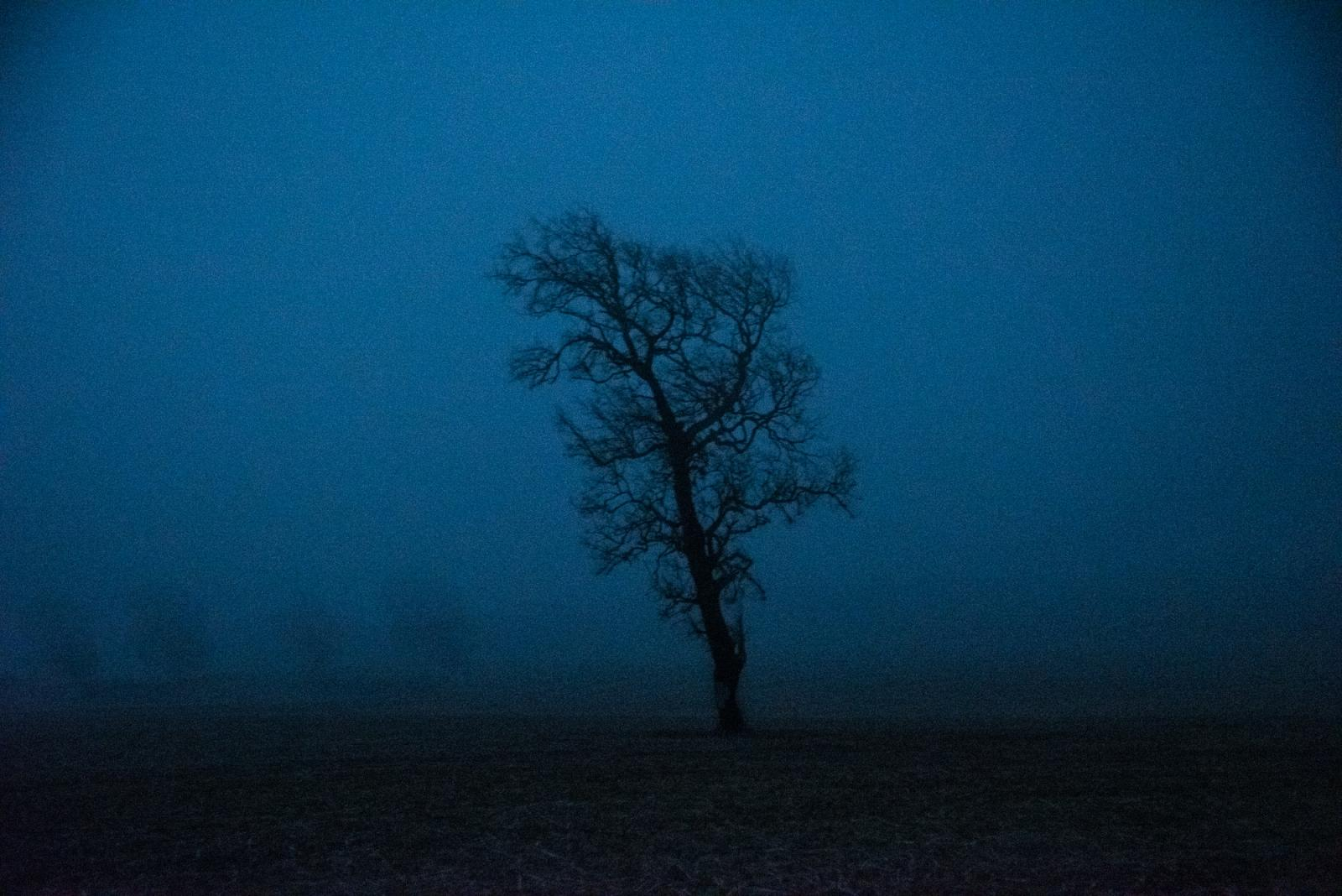 """A tree stands alone in a field near Collipulli, Araucanía region. This area has been labeled as """"red zone"""" due to the ongoing land conflict between the state, landowners and Mapuche communities. Collipulli region, Araucanía. Chile. April 18th, 2019."""