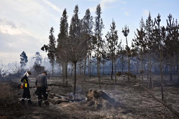Experts from the Quito fire department review the remains of the area burned in a fire that occurred the morning of August 7, 2014, northeast of the capital, via the Tababela International Airport. Quito, Ecuador.
