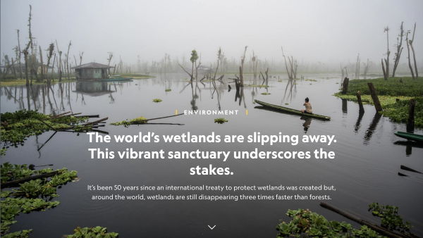 On National Geographic: The world's wetlands are slipping away. This vibrant sanctuary underscores the stakes.