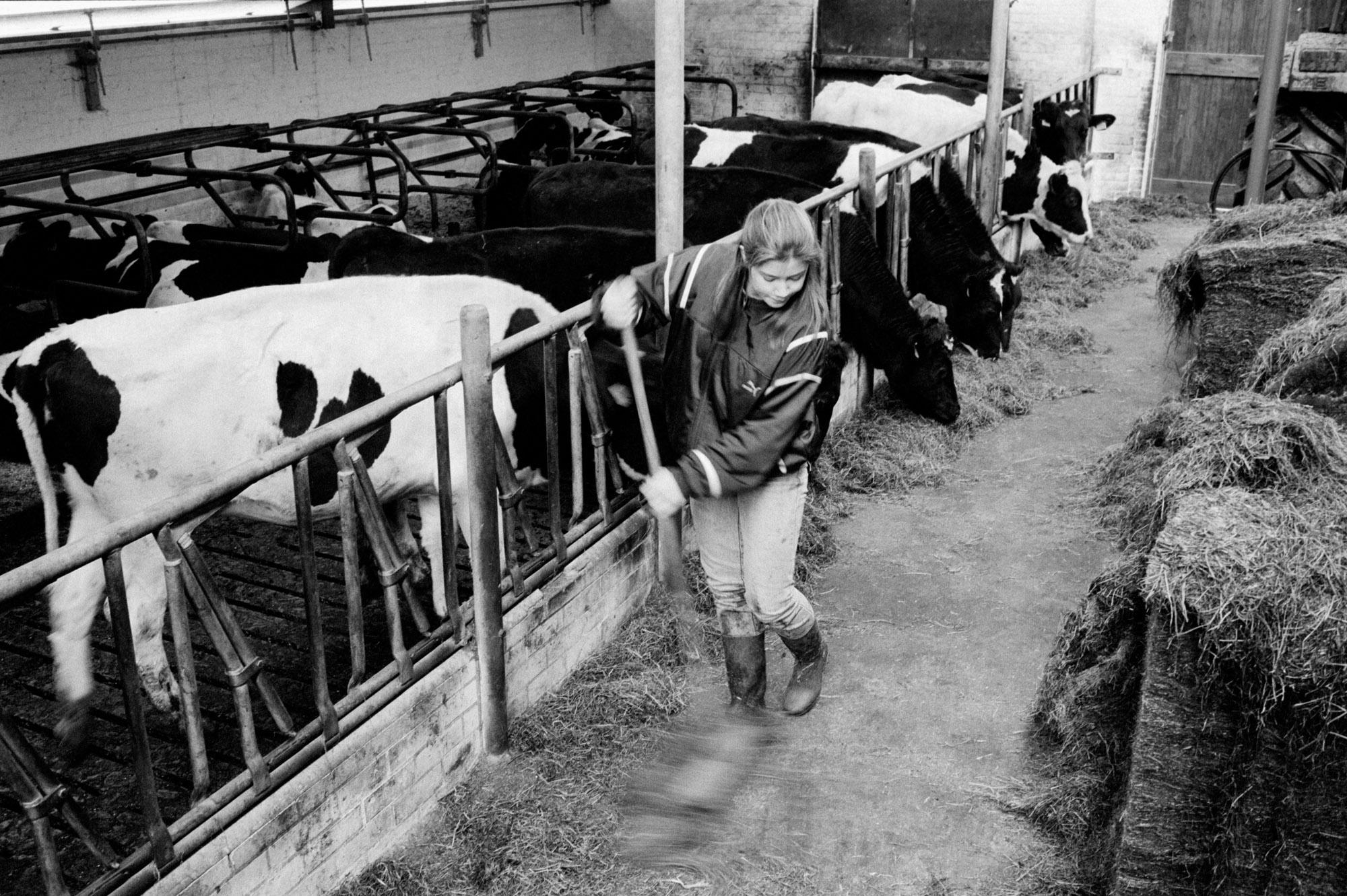 Mirjam works in the barn during her weekly apprenticeship for the agricultural school on the dairy farm of Piet Verhoef. Nieuwerbrug, The Netherlands. February 1995.