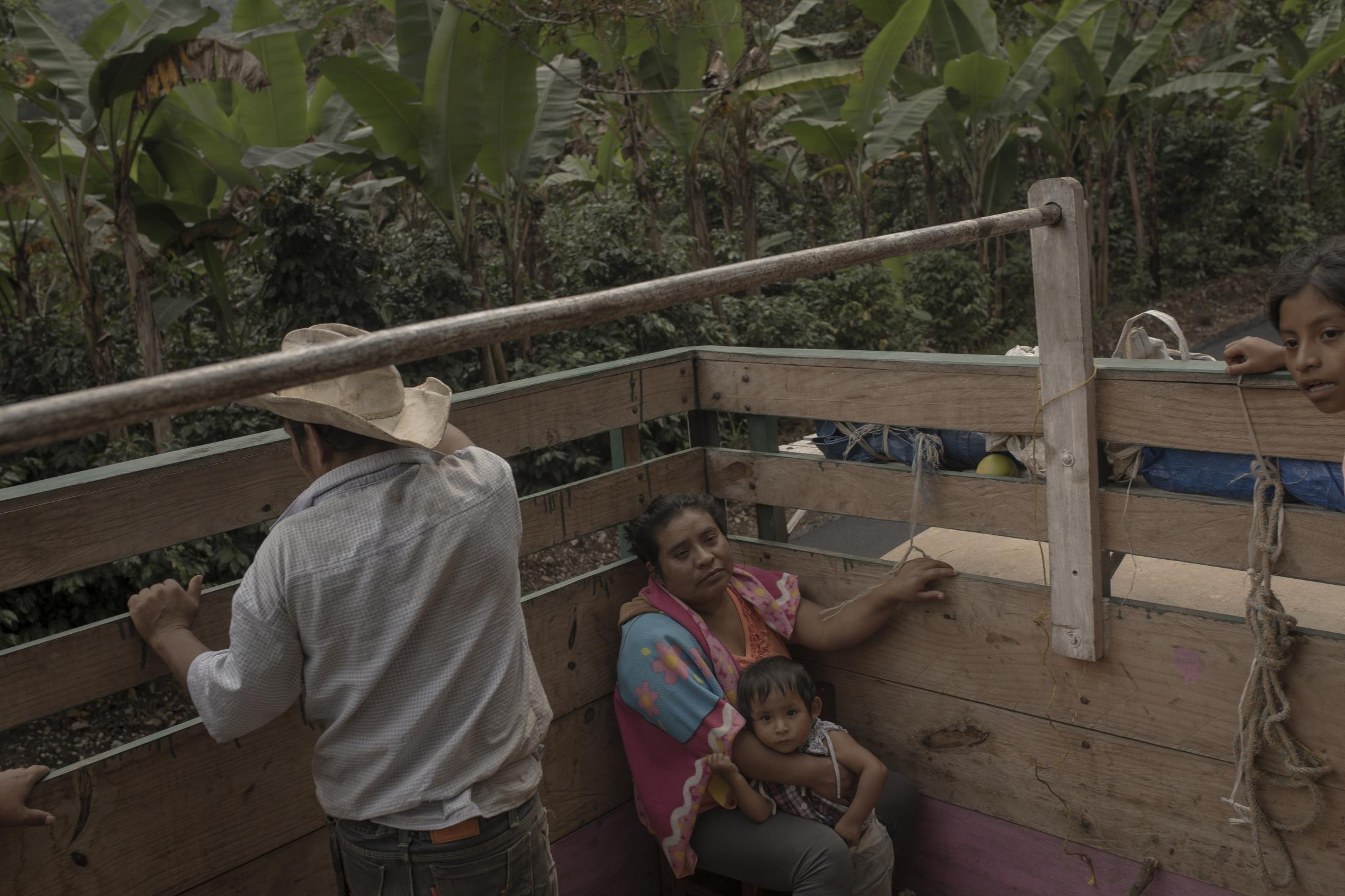 La familia Frías Tablas viaja en una camioneta entre cafetales y matas de plátano luego de trabajar en la finca de café durante una jornada laboral el 19 de Agosto de 2020, en el municipio de Ixhuatlán del Café, Veracruz.