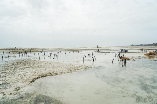 Seaweed Farming Against Gender Inequality and Climate Change