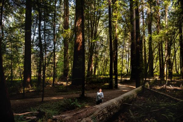 Redwood Forest portraits