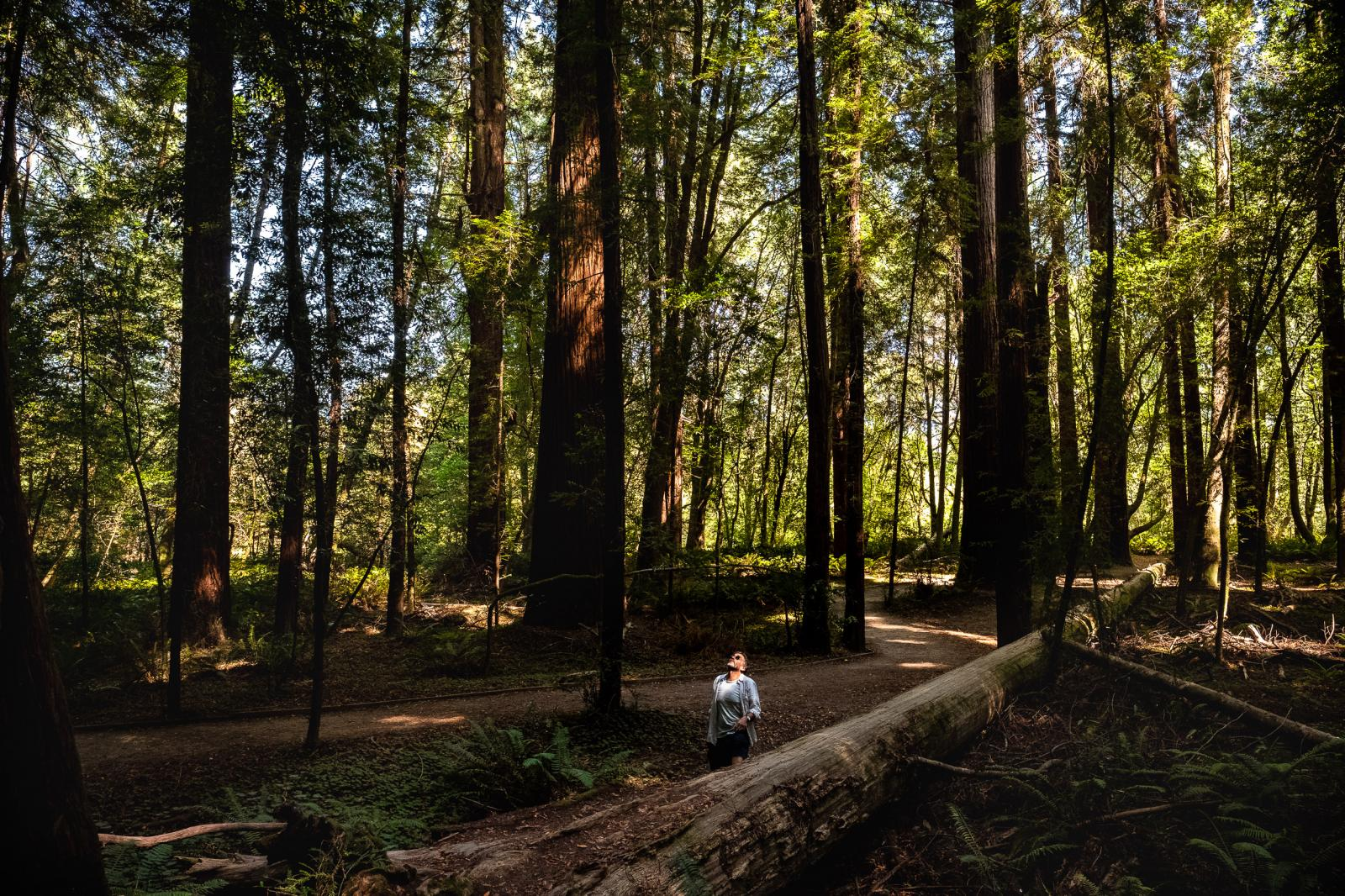Photography image - Loading __mette_Lampcov-Redwoods-1.jpg