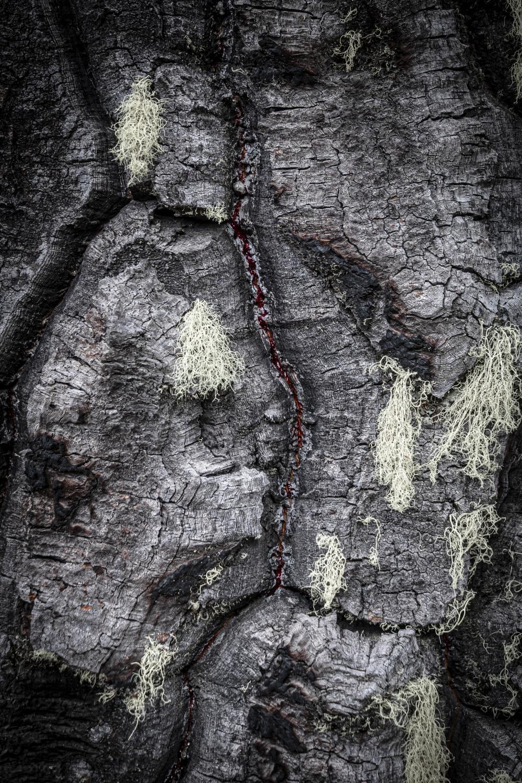 """""""... me hizo acordar lo que decían los kufikeche en el ngillatun... lo que se viene a futuro, que no es bueno. Lewfu (río) seco,lágrimas del che,mapu (tierra) seca. Kutra, se ve rojo, las enfermedades que vendrán, en la cara del che, representada en mamul (madera, árbol). El che somos todos nosotros"""". Mauricio Pangui Silva, Mapuche Huilliche de Río Cruces."""