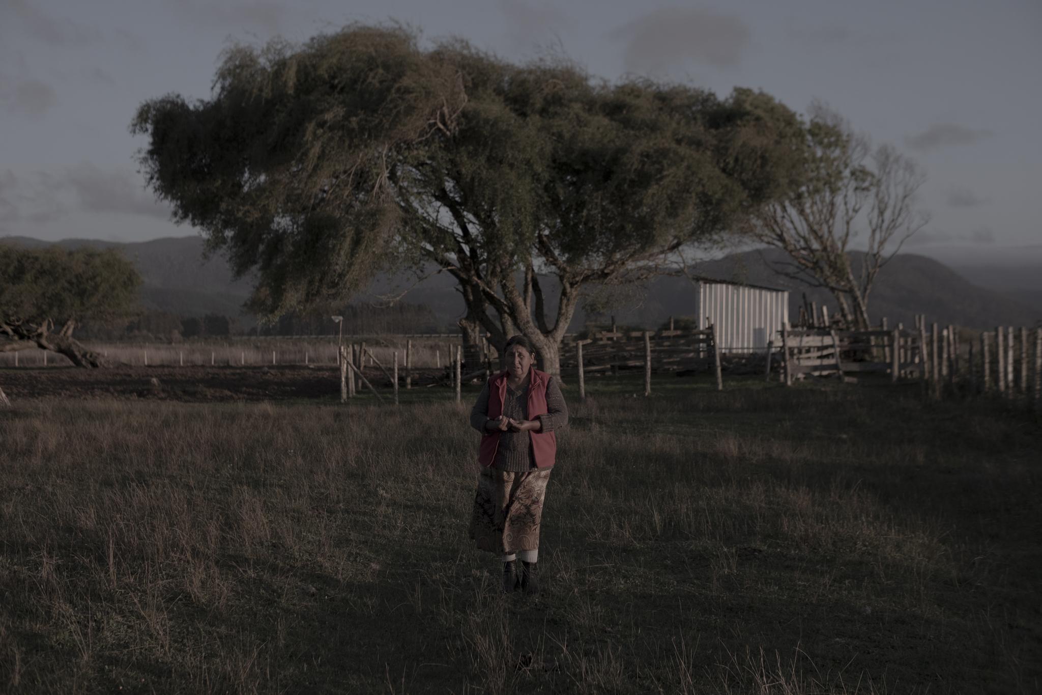 Los sauces llorones son de las pocas especies de árboles que sobrevivieron al maremoto de 1960. Nelly plantó el sauce detrás de ella, delante del que plantó su abuela a orillas del río.