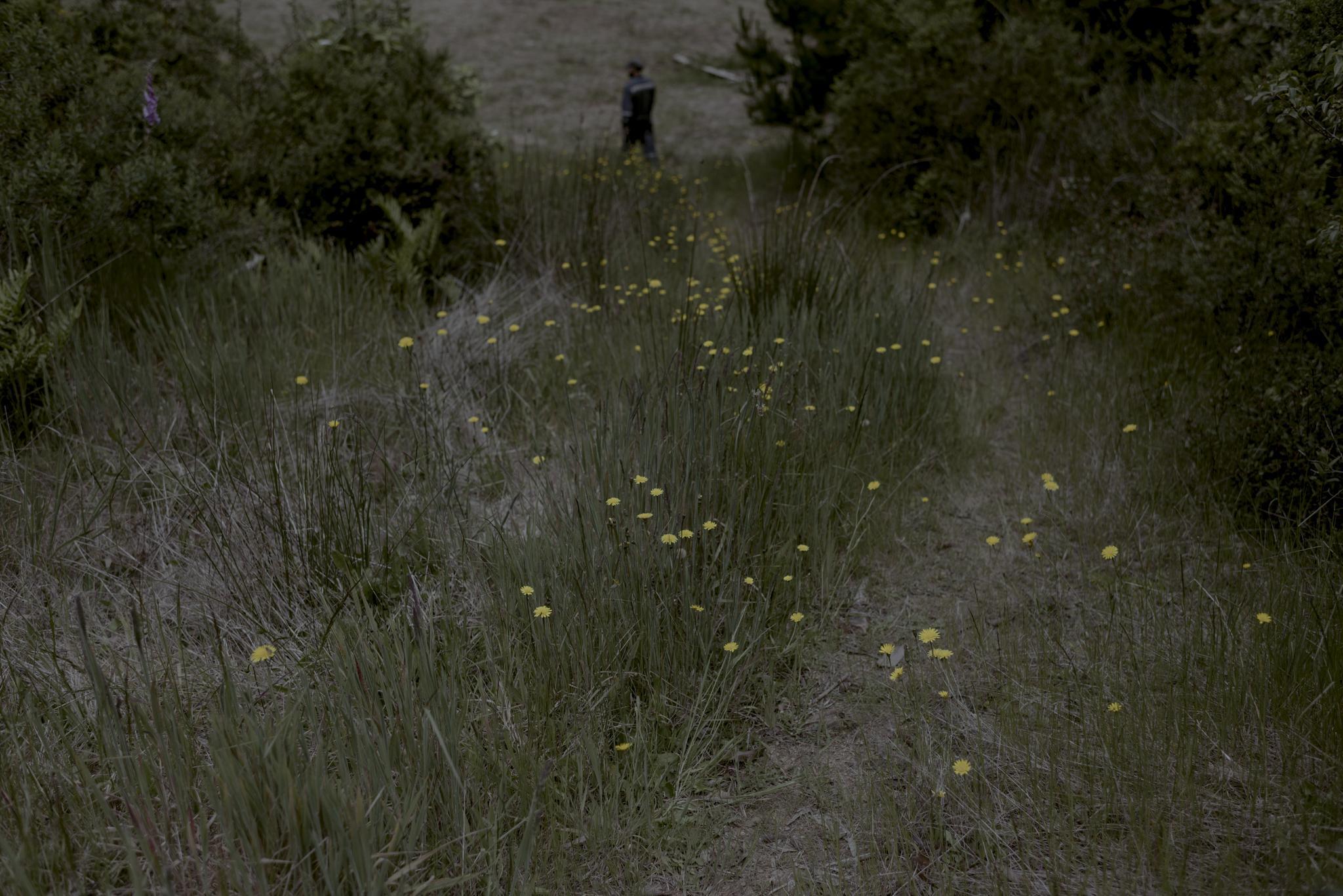 José está encargado de arrancar de este campo las especies exóticas de árboles y así favorecer las especies nativas.