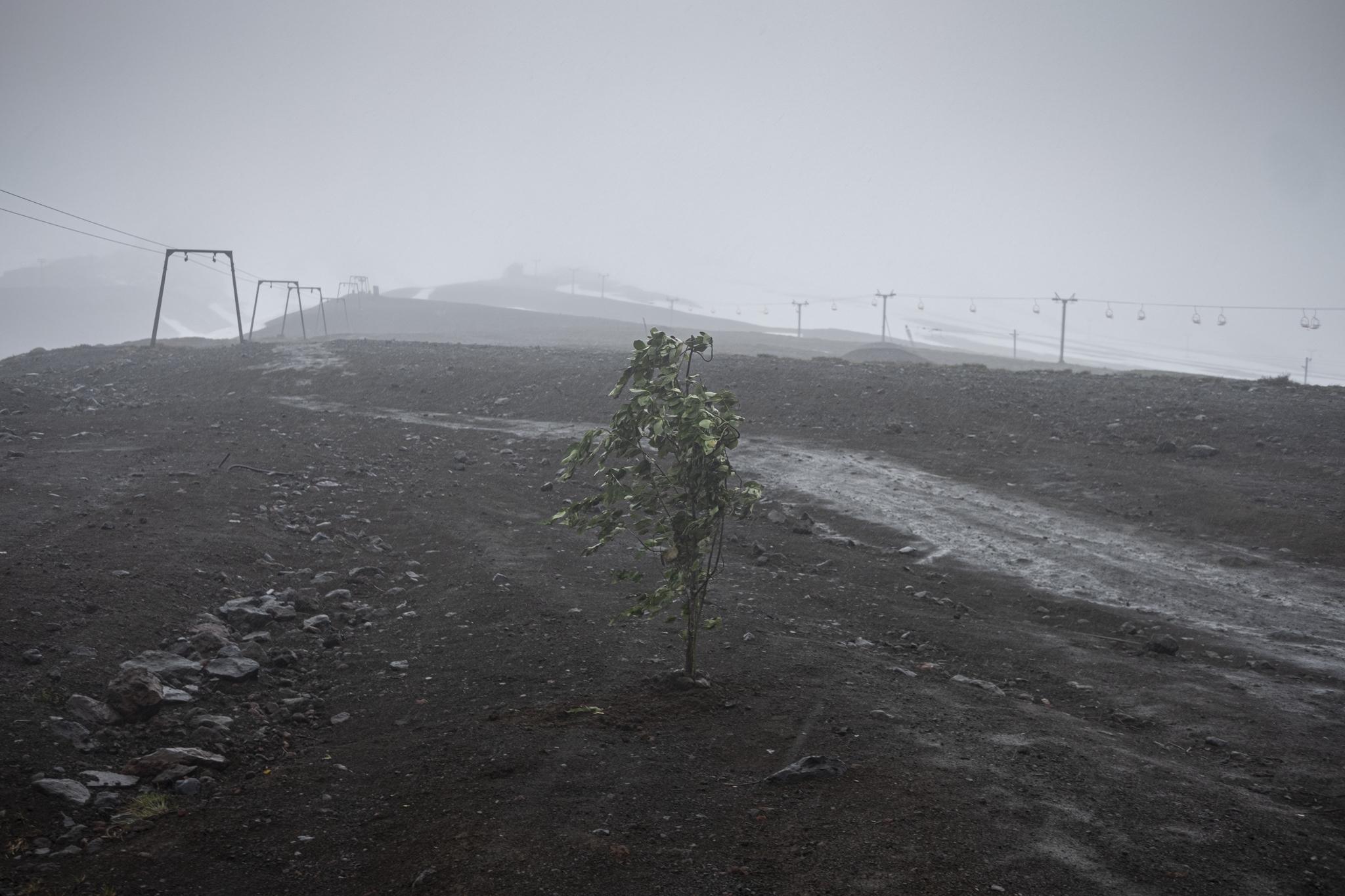 """El kimche Juan Ñanculef enterró un canelo, árbol sagrado para la cultura Mapuche, en las faldas del volcán Rucapillán, cuyo nombre se traduce como """"casa de los espíritus"""", el día del eclipse en la Araucanía, como rogativa."""