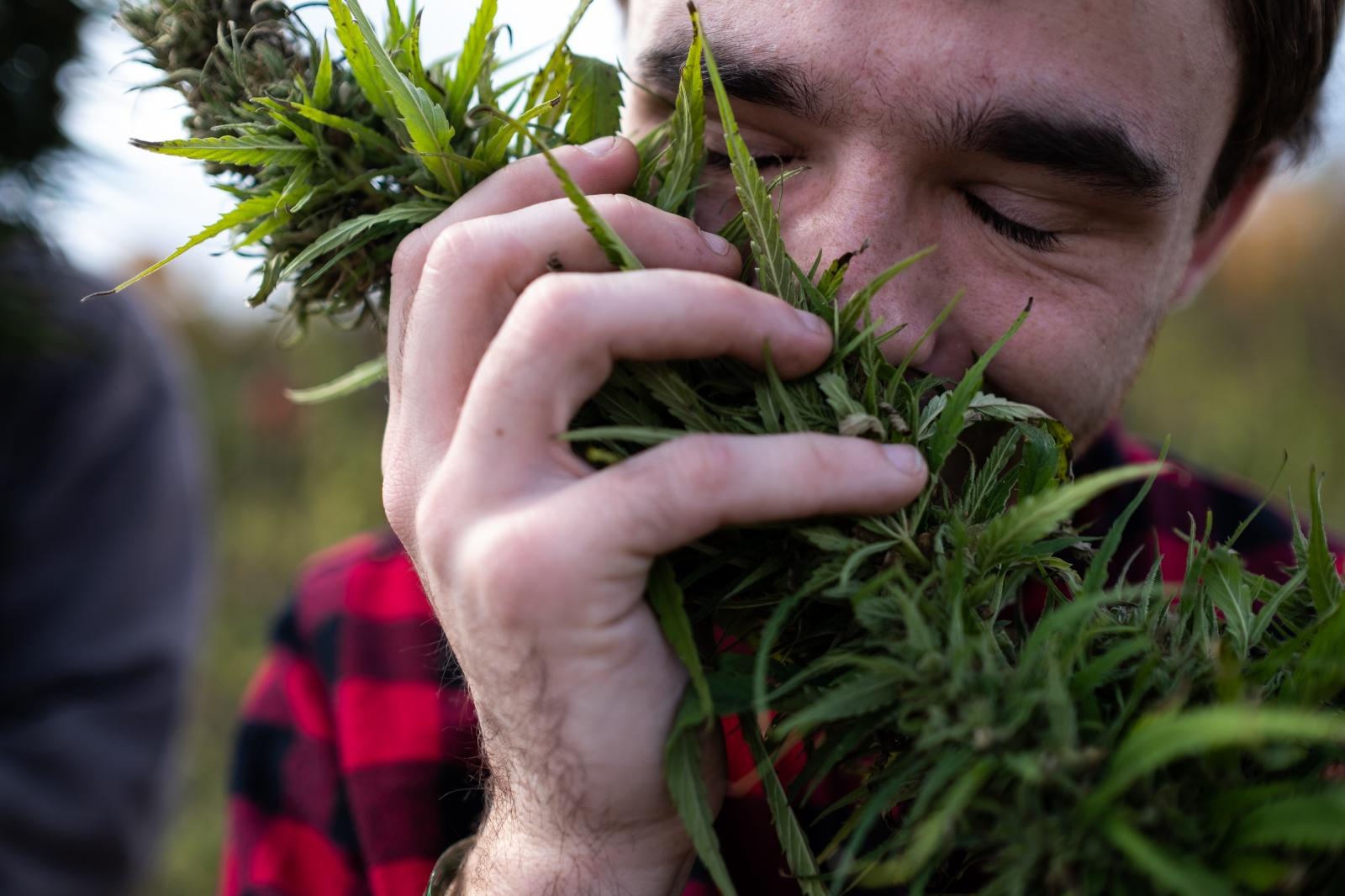 "John Kimberly, a festival attendee from New Jersey, smells a hemp flower, then cradles it in his hands. ""Is this how you look at a child for the first time?"" he says."