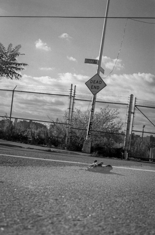 Dead End - Dead pigeon in Brooklyn