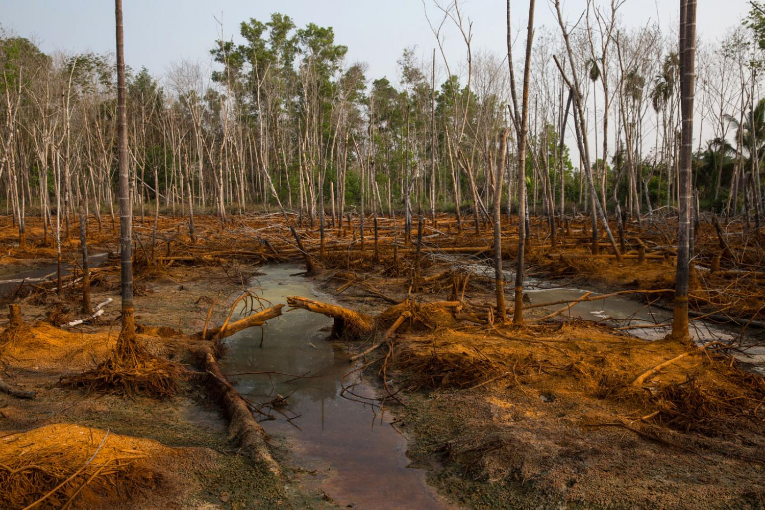 An area of heavily contaminated farmland polluted with unknown chemicals after a nearby recycling factory's storage tank broke. Rayong, Thailand.