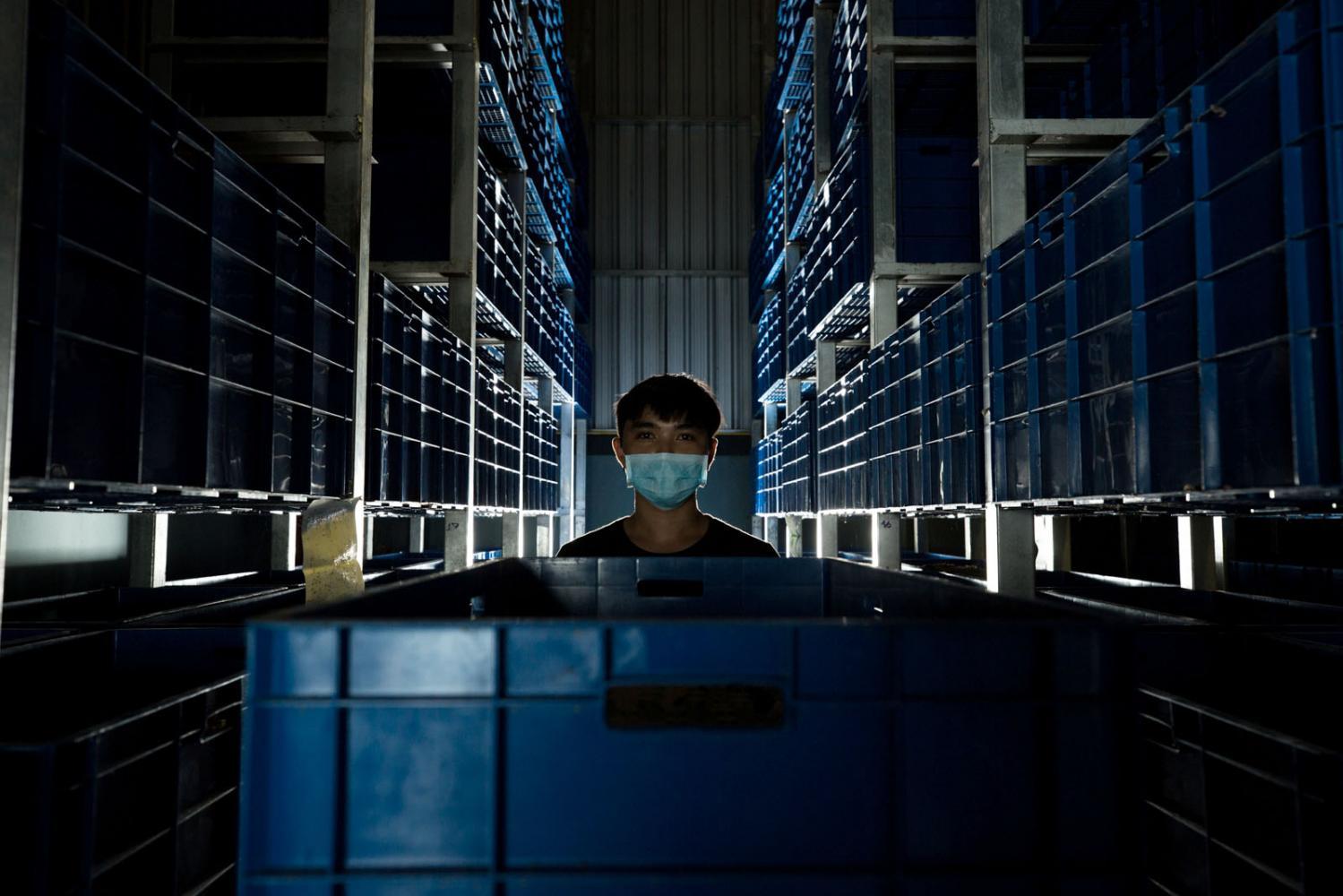 A worker inside a high-tech cricket farm in Chiang Mai, Thailand.