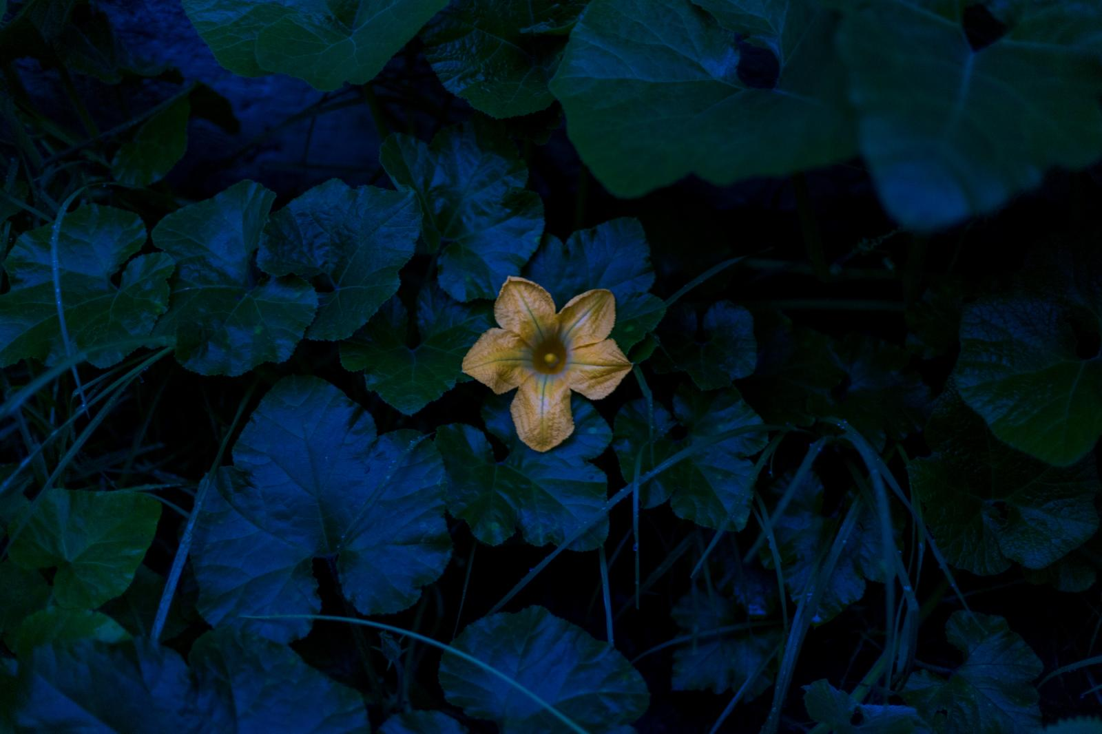 Photography image - Loading cosecha_1.jpg