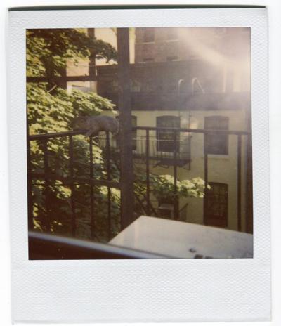 Summer Evening Polaroids