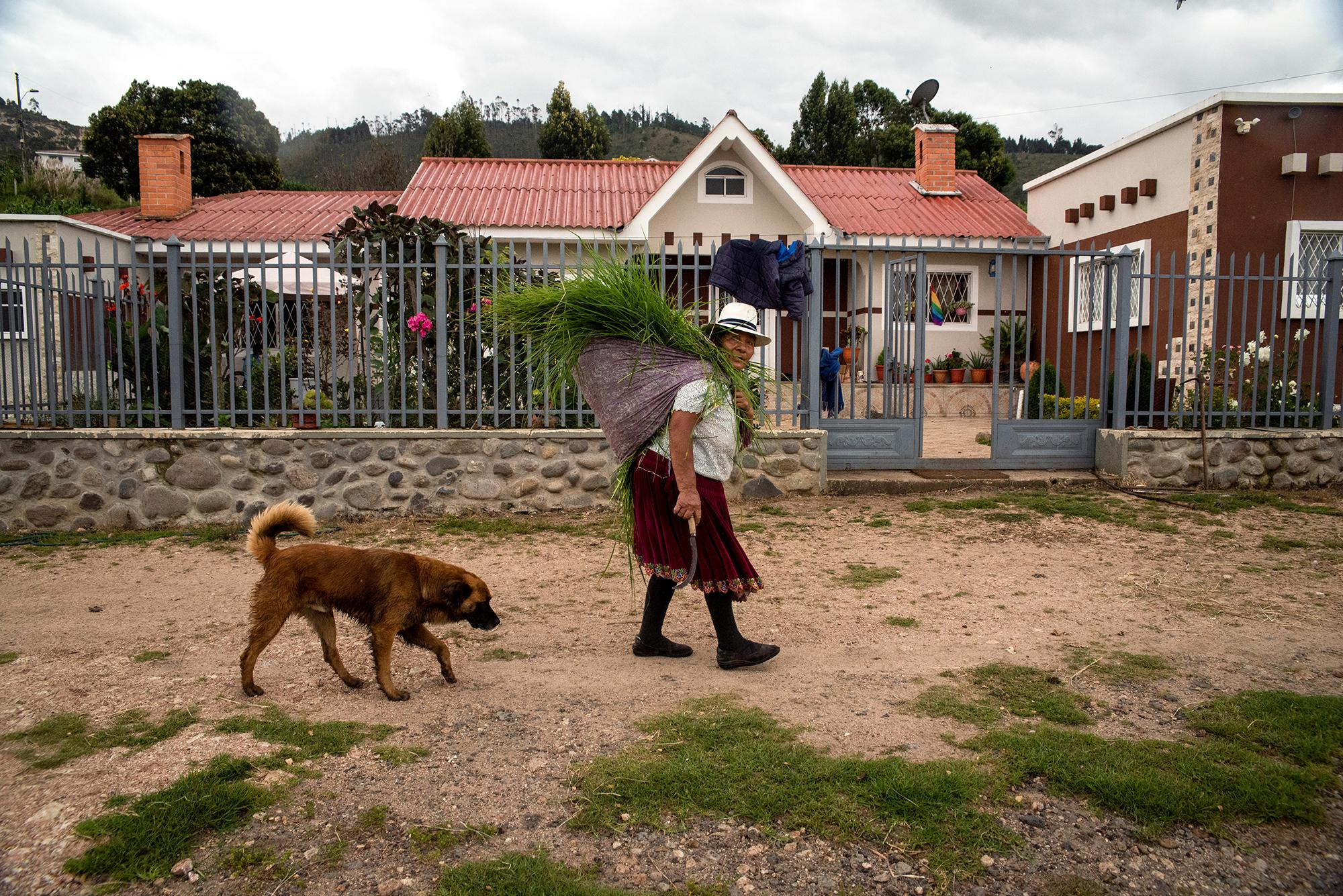 Julia Tacuri (79), a Kañari indigenous woman, is carrying grass to feed her animals in the afternoon of March, 22. 2020. Cuenca, Ecuador. Johis Alarcón for The New York Times.