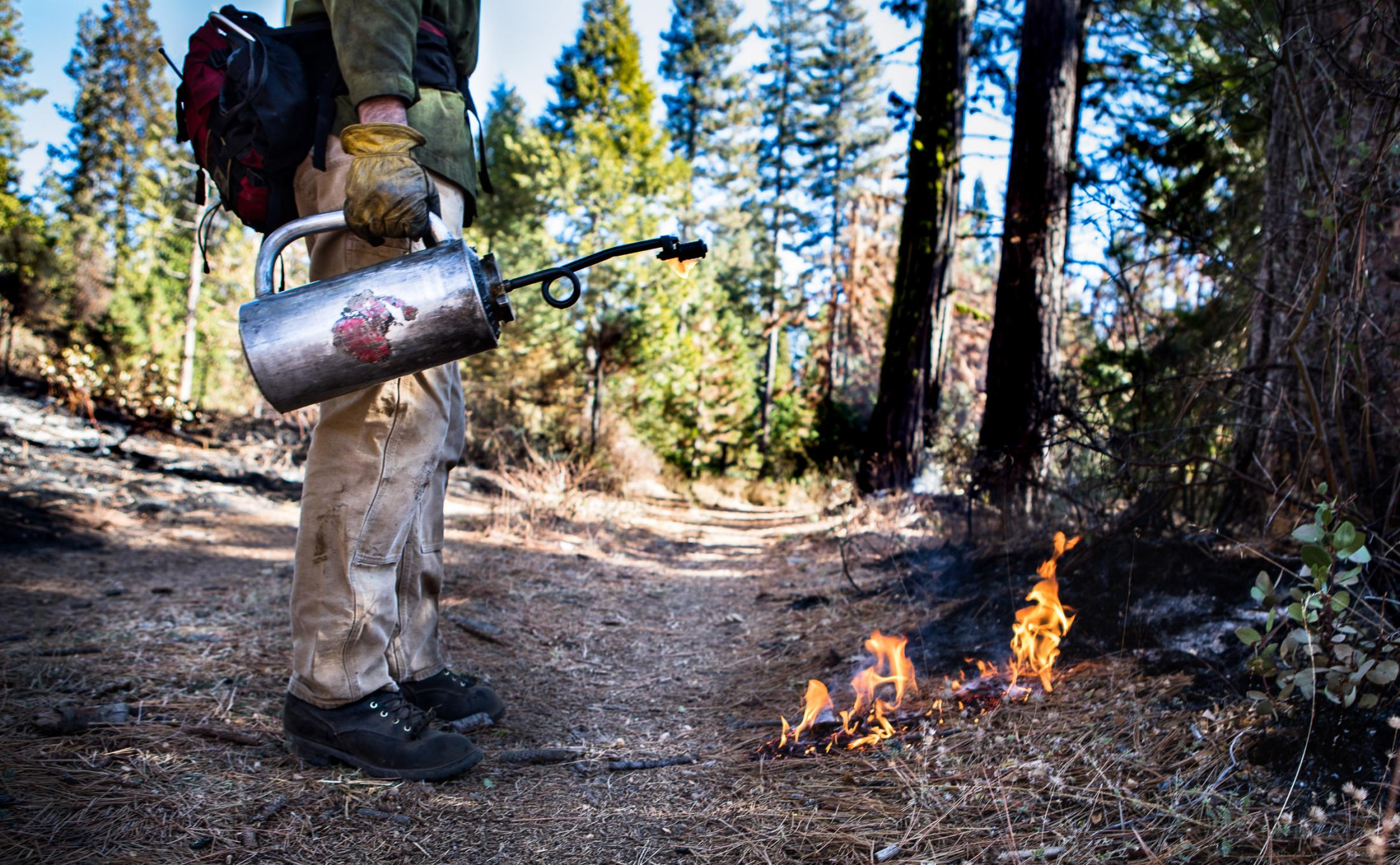 """A prescribed fire is lit with a mix of 3:1 diesel to gas. Historically, natural fires tended to burn in the West during summer and fall. Prescribed fires are conducted in the """"shoulder seasons"""" on either end of summer when conditions are right as in Fall: wildlife has dispersed, the fire fuels are dry, and vegetation has deteriorated."""