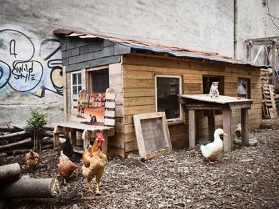 Urban Farming New York City