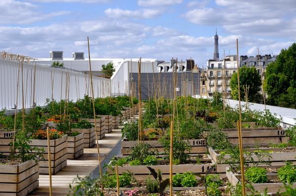 Urban Roof Farming