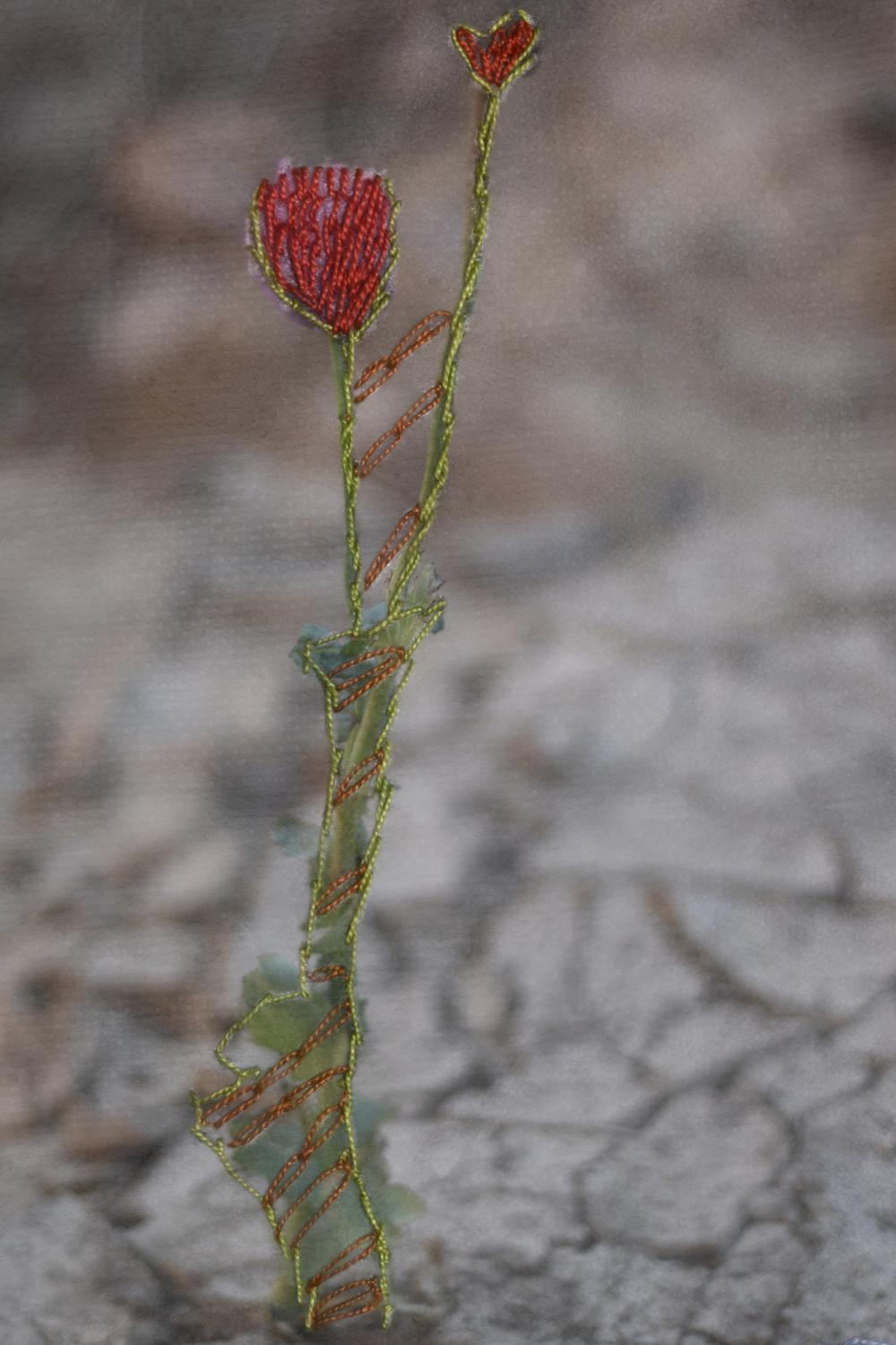 Emberoidered photograph of a flower sprouting from dry land. Embroidery by Om Anas from AlTarfa village.