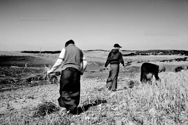 A group of Bedouin women, working in the family fields close to what used to be the 1967 border line fence. as IDF soldiers patrol this fence all the time. situation can escalate quickly Ar Ramadin Village, South Mt Hebron, West Bank. The 5 kilometres area of the 1967 what used to be the border between Israel and Jordan (now West Bank) just outside the village is notoriously easy to slip through.