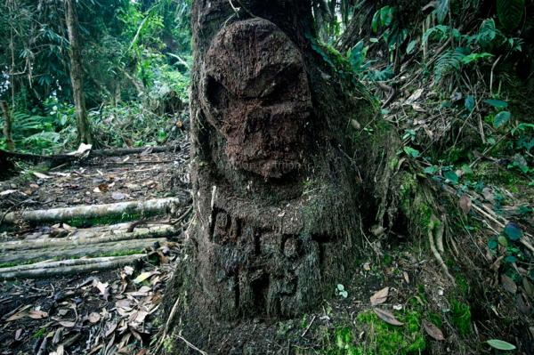 A skull shape engraved on a tree, in order to scare out Nasa people from parts of the jungle areas, where the Colombian army is camping, Miranda, North Cauca.