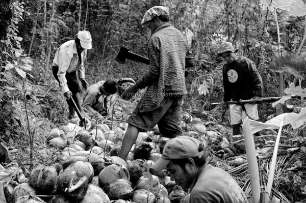 The cantomayor family working in their fields located in the no mans land area between christian and muslim communities, an area which was attacked repeatedly by MILF rebels.